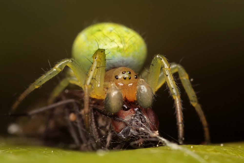 Spider in web with prey - photo#4