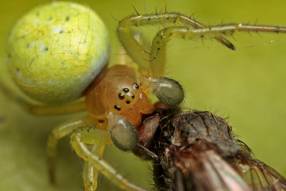 Spider in web with prey - photo#9