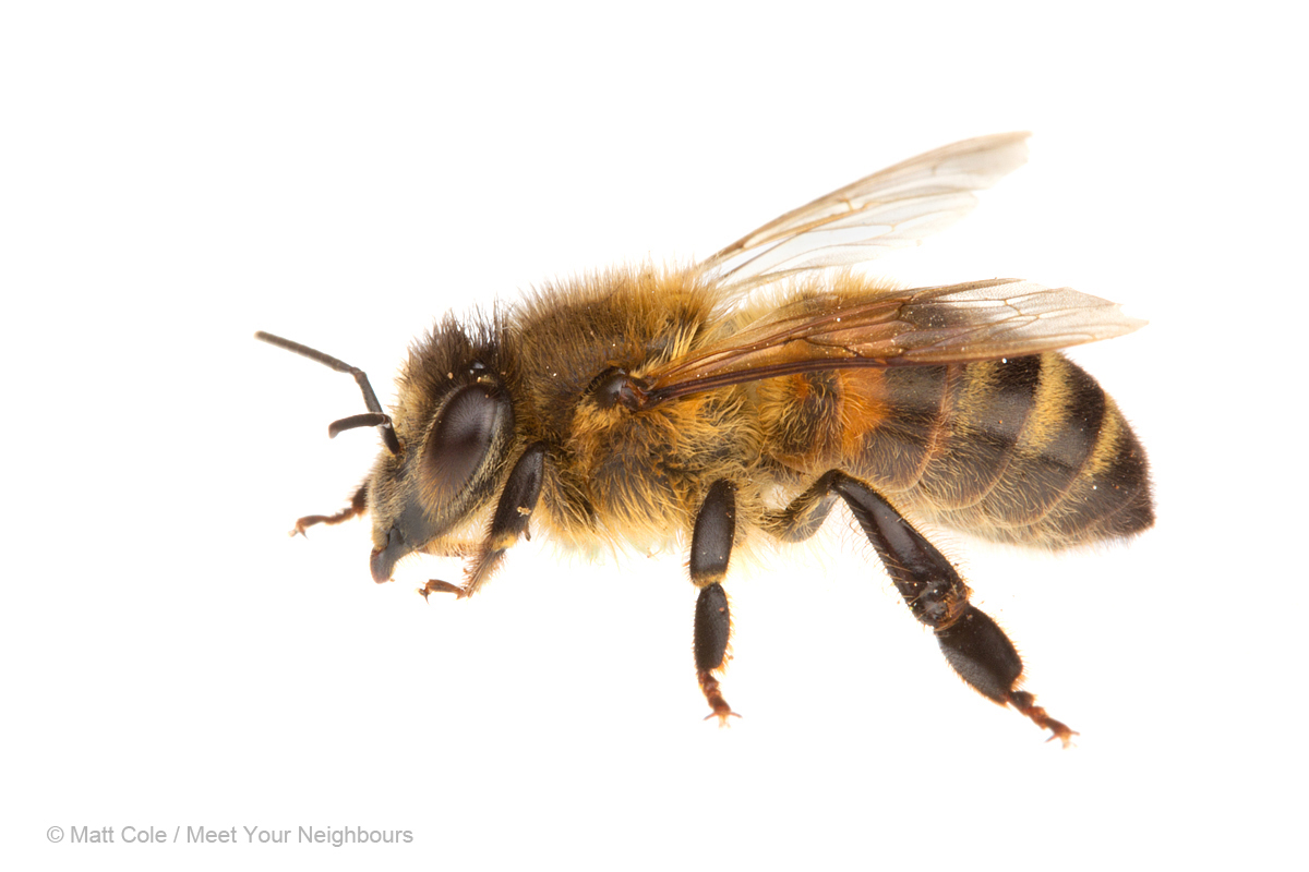 It's time for the talk: the wasps and the bees - It is ... - photo#37